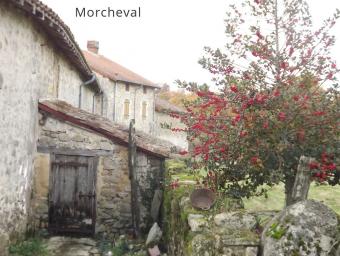 morcheval