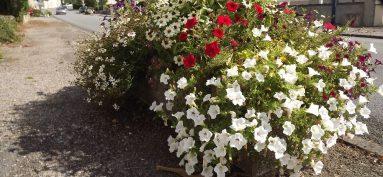 Chamborêt fleuri